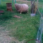 Vesnice roku Jihomoravského kraje 2011, Oranžová stuha, Obec Hýsly